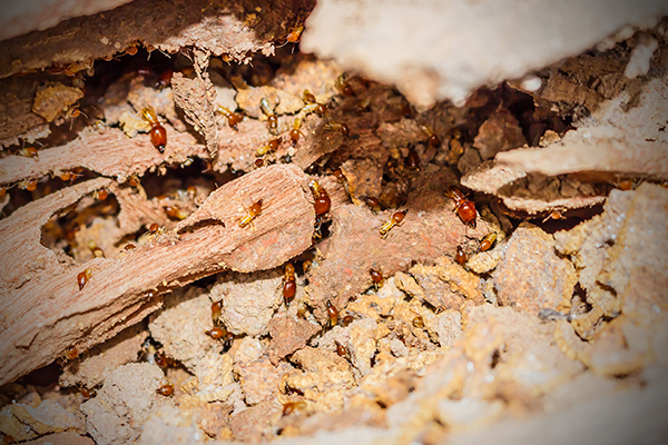 Termite Control & Effective Reliable Pest Control in Southwest and Southeast ...