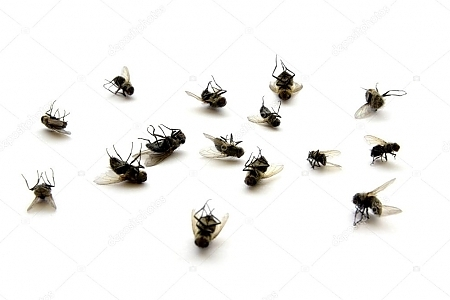 depositphotos_11768564-stock-photo-dead-flies